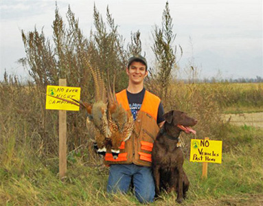 Good day pheasant hunting with motivated retriever